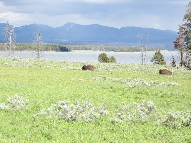 Yellowstone 1 074