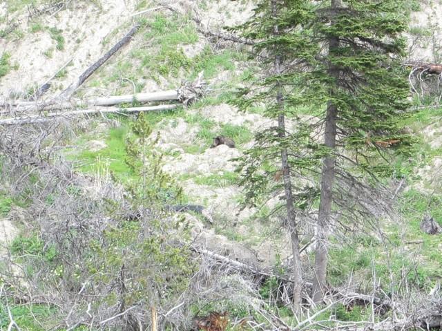 Yellowstone 1 076