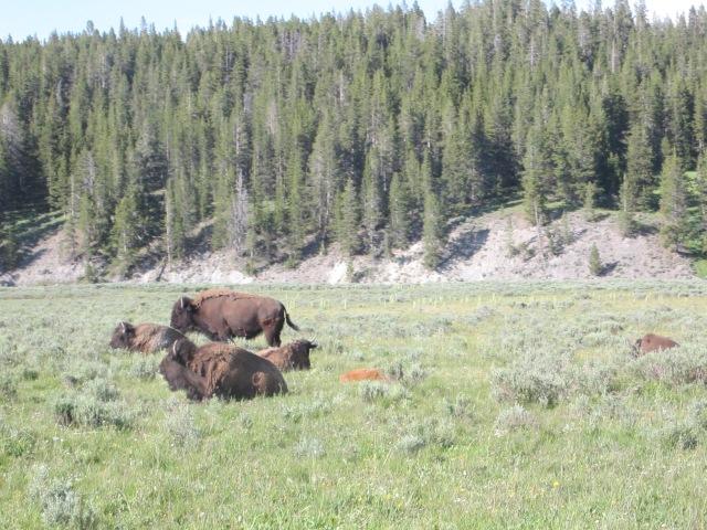 Yellowstone & rodeo 070