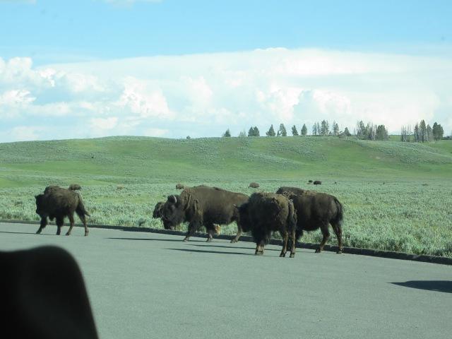 Yellowstone & rodeo 077