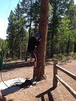 Bailey climbing