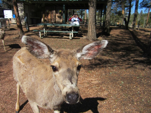 Golden Bell campground 005