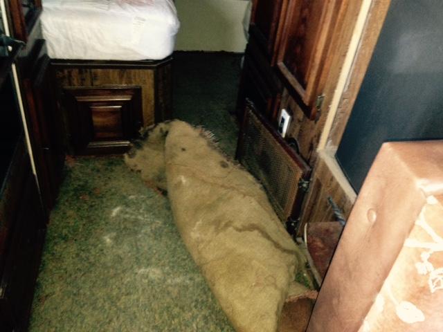 carpet out