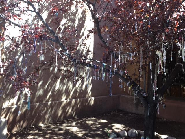 Lorretto rosary tree